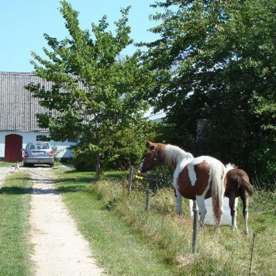 Pinto horses summer 2008
